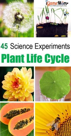 45+ Plant science ex