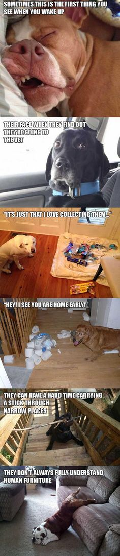 Animal funnies. Dump A Day Owning A Dog, The Struggle Is Real - 16 Pics #dogs