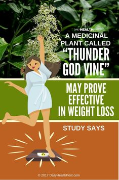 "A Medicinal Plant Called ""Thunder God Vine"" May Prove Effective In Weight Loss, Study Says"