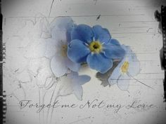 watercolor - forget me not Little Flowers, Blue Flowers, Cool Tattoos, I Tattoo, Forarm Tattoos, Forget Me Not Tattoo, Flower Tattoo Meanings, Memorial Tattoos, Nature Tattoos