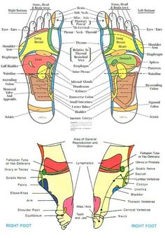 Hand and Foot Reflexology Chart. 25 Hand and Foot Reflexology Chart. top Of Foot Reflex Chart Vatan Vtngcf Ayurveda, Reflexology Massage, Foot Massage, Foot Reflexology Chart, Lymph Massage, Reflexology Points, Massage Corps, Foot Chart, Health And Wellness