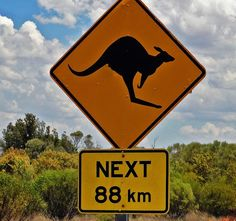 A whole lotta nothin' but kangaroos in the Outback Melbourne Girl, Unusual Animals, Animal Crossing, Lions, Funny Animals, Animal Signs, Road Trip, Around The Worlds, Kangaroos