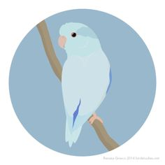Pacific Parrotlet, Bird Art, Drawing Ideas, Disney Characters, Fictional Characters, Backgrounds, Birds, Watercolor, Illustrations