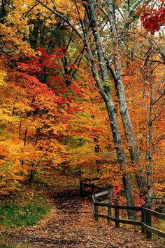 Fall Indiana