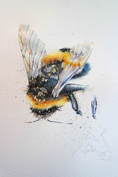 Last week I was having a bit of a moan about how hectic my week was, this week I am thrilled by how hectic my week has been. I never dreamt my set of watercolours and my paints would lead me to such wonderful places. So today back home in Devon I wanted to paintsomething tomake my heart sing, bumble bees. I submitted