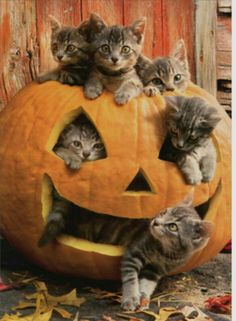 Apr 2020 - Tableau sur les chats,chaton et chatte.Animaux See more ideas about Pets, Cats and Kittens. Cute Baby Animals, Animals And Pets, Funny Animals, Funny Cats, Animals Images, Wild Animals, Funny Humor, Cute Kittens, Cats And Kittens