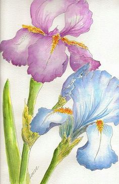 My Mom is an Iris lover too.I painted these for her today for her Birthday which is on June Watercolor Pictures, Watercolor Cards, Watercolor Flowers, Watercolor Paintings, Watercolour, Watercolor Portraits, Watercolor Landscape, Abstract Paintings, Iris Painting