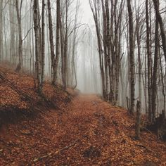 November 16, 2014, 2:51 PM | rushersdieyoung | VSCO Grid™