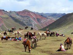 Taxis along the trek to Rainbow Mountain, Peru Backpacking Peru, Lake Titicaca, Machu Picchu, Trek, Camel, Coast, Mountain, Rainbow, Animals