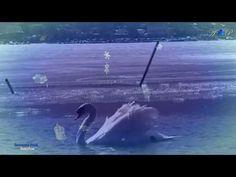 ✿ ♡ ✿ BERNWARD KOCH - Bekoflow - YouTube