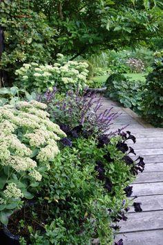 Gorgeous Green And White Garden To Create Calm Atmosphere - Pflanzideen White Gardens, Small Gardens, Outdoor Gardens, Purple Garden, Shade Garden, Landscape Design, Garden Design, Wooden Garden, Flower Beds