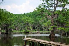 Explore Caddo Lake State Park, Texas - Bucket List Dream from TripBucket