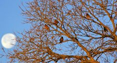 Robins in the morning light! by SandhillsWesternVacations.com
