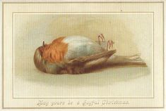 Nothing says Merry Christmas quite like a dead robin. Yeuk!