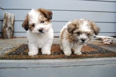 Top 10 Ways to Puppy Proof Your Home - PetGuide Cute Animal Pictures, Puppy Pictures, Cute Puppies, Cute Dogs, Most Cutest Dog, Pet Trailer, Shih Tzu Puppy, Shih Tzus, Secret Life Of Pets