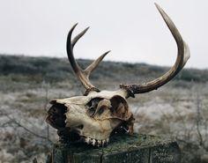 """crownedcorvid: """" """" naturepunk: """" Photography by NaturePunk. """" """" #skull #nature"""