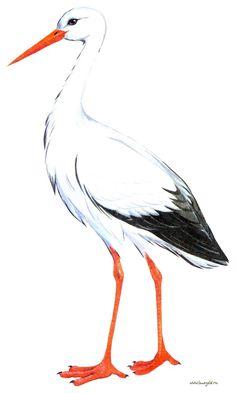 kreslené obrázky vtákov - Hľadať Googlom