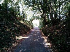 Guernsey im september