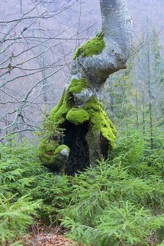 Boogey man tree probably has termites