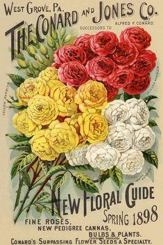 Старинные каталоги цветов. Обсуждение на LiveInternet - Российский Сервис Онлайн-Дневников