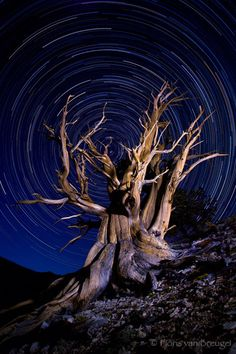 Free Guide to Photography Star Trails and Twilight : Art in Nature Photography