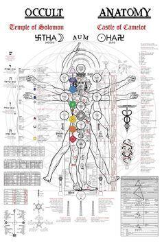 The Occult Anatomy Kabbalah Alchemie Baum des Ecommerce Webdesign, Webdesign Layouts, Tantra, Human Body Drawing, Human Body Art, Tarot, Les Chakras, Yoga Chakras, Kundalini