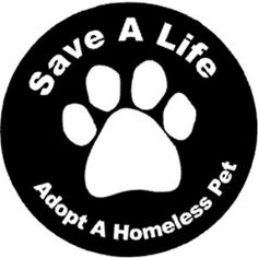 7 Best Cat Rescue Slogans Images Animal Shelter Pets Slogan
