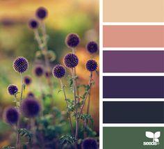 Home Color Palette By Room Design Seeds Super Ideas Color Schemes Colour Palettes, Nature Color Palette, Colour Pallete, Color Combos, Purple Color Schemes, Color Harmony, Color Balance, Design Seeds, Color Swatches