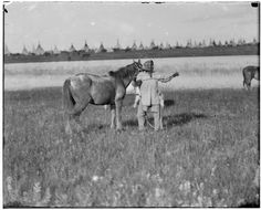 Morning Eagle picketing horse.