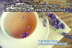 Sent Bon, Try It Free, Tea Tree, Healing, Buffer, Food, Provence, Content, Health Tips