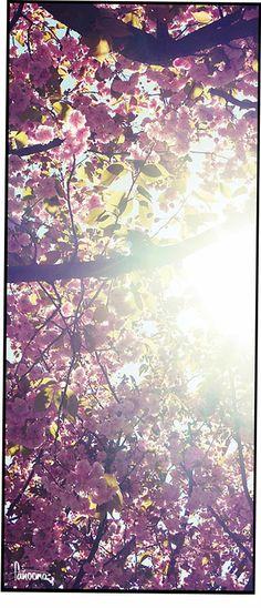 Nach dem Leid kommt jetzt der Frühlich wieder - für Dich! #spring #sun #fanoona #blossom