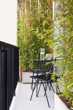Balcón moderno en un departamento chico con pequeño bosque de plantas de bambú y juego de jardín de hierro.