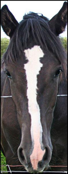 Horses - title 'Black Beauty Mark' - by Leenie