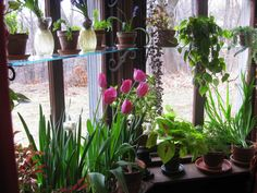 Plant filled window