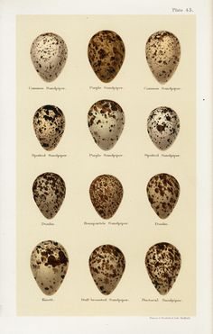 Egg Prints from Seebohm 1896