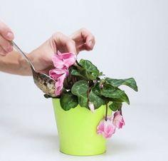 Quando la vostra pianta appassisce o non l'avete innaffiata abbastanza o il luogo in cui l'avete messa non era di suo gradimento. In ogni caso c'è una soluzione quasi magica che le ridarà vita e splendore