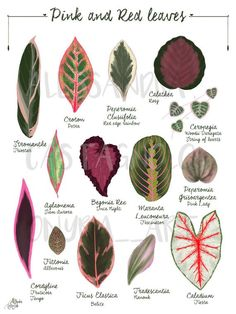 Read the full title Pink and Red Tropical leaves plant illustration, botanical, Valentine's day gift, romantic, home decor