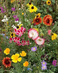western wildflowers - Google Search