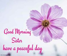 Looking for Good Morning Wishes for Sister? Start your day by sending these beautiful Images, Pictures, Quotes, Messages and Greetings to your Sis with Love. Good Morning Sister Images, Morning Love Quotes, Good Morning My Love, Good Morning Photos, Good Morning Messages, Good Morning Greetings, Morning Pictures, Good Morning Wishes, Good Afternoon