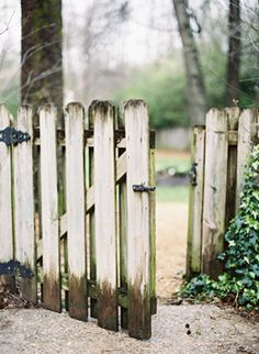 A Delicate, Tuscan-Inspired Backyard Wedding Picket Fence Garden, Garden Gates And Fencing, White Picket Fence, Fence Gate, Picket Fences, Wooden Fences, Heaven's Gate, White Fence, Old Gates