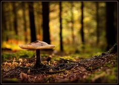 Lone mushroom in a forest