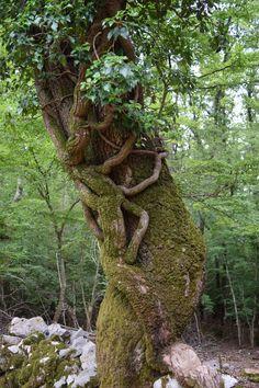 Tramontana Wälder #Cres #Kroatien #Croatia #Kvarner