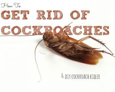 how to get rid of roaches without harming pets