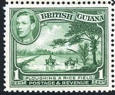 """British Guiana 1938 Scott 230 green """"Plowing a Rice Field"""" British Guiana, Stamp World, Crown Colony, Argentine, Vintage Stamps, King George, West Indies, Stamp Collecting, Elizabeth Ii"""