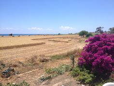 #Cyprus #Harvest