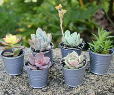 If you're planning to use succulents for your wedding this is the post for you. Learn where to get succulents for bouquets, favors and centerpieces! Succulent Wedding Favors, Wedding Party Favors, Diy Wedding, Rustic Wedding, Wedding Gifts, Wedding Flowers, Wedding Decorations, Wedding Quote, Wedding Ceremony