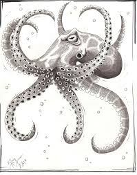 how to draw an octopus displaying 18 images for realistic octopus drawing art instructk pinterest octopus anchor tattoos art techniques and