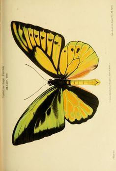 v. 23 (1900) - Természetrajzi Füzetek kiadja a Magyar nemzeti Muzeum. - Biodiversity Heritage Library