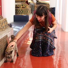 Lots Of Cats, Buddhist Temple, Buddhism, Temples, Sari, Animals, Instagram, Fashion, Saree