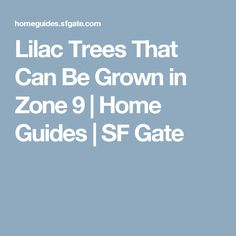 Lilac Trees That Can Be Grown in Zone 9 | Home Guides | SF Gate